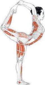 yoga houdingen voor je zenuwstelsel  yogarevalution